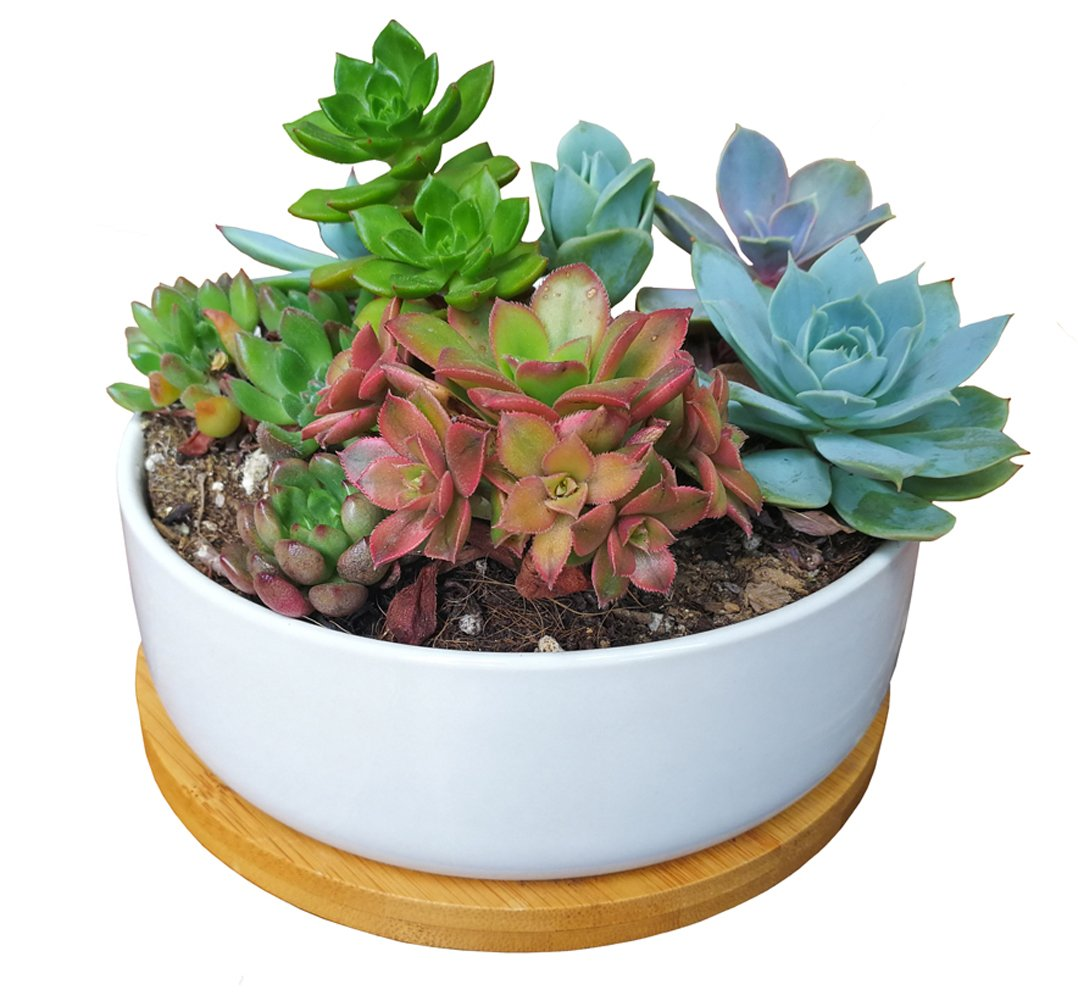LANKER 6.3 Inch Round White Ceramic Succulent Planter Pot Decorative Cactus Plant Pot Flower Container with Bamboo Tray (Round 6.3Inch)