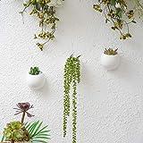 YXMYH Modern Wall Mounted Planter Round Ceramic