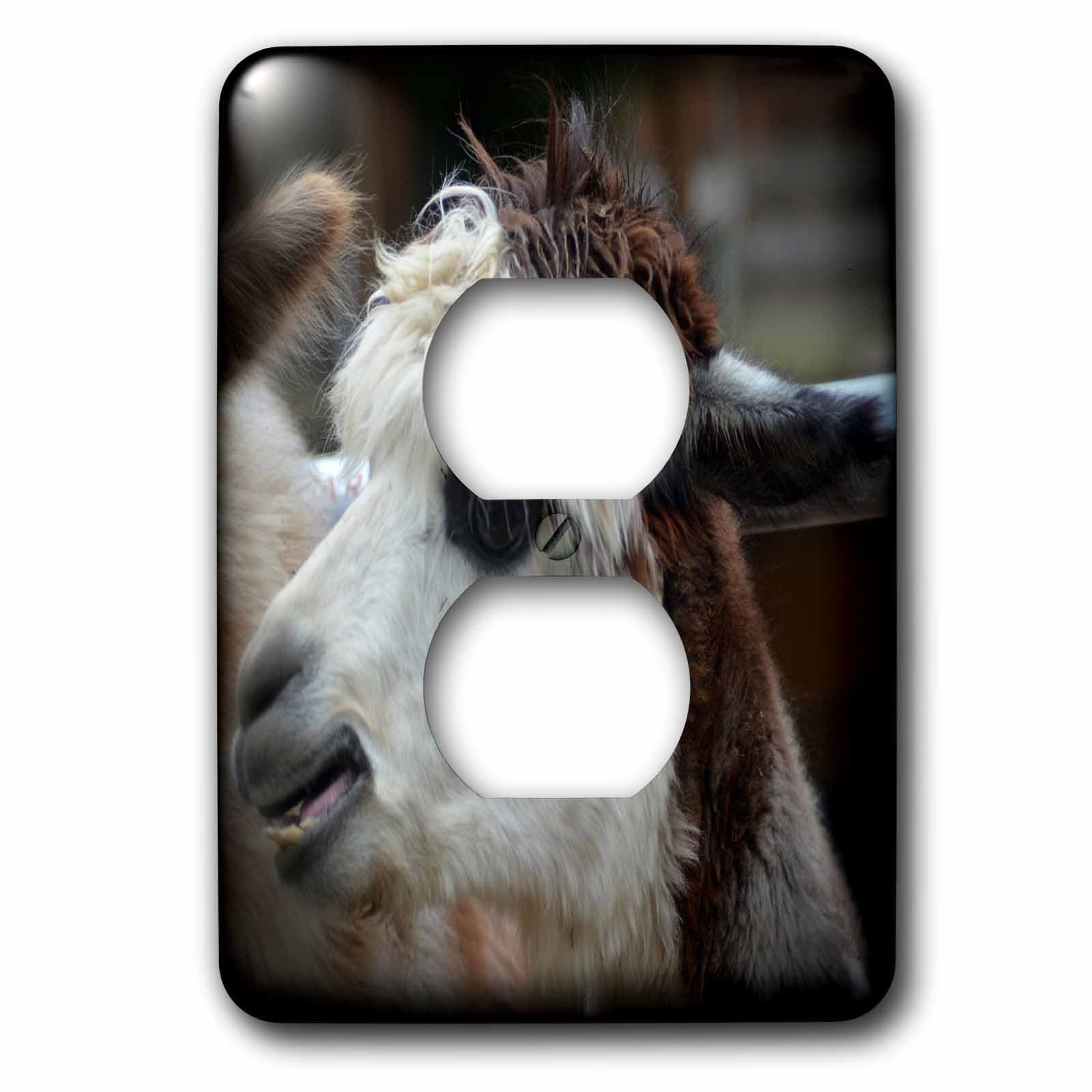 3dRose WhiteOaks Photography and Artwork - Lamas - White Faced Lama is a beautiful lama with a white face - Light Switch Covers - 2 plug outlet cover (lsp_265350_6)