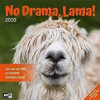 No Drama, Lama! 2020, Wandkalender / Broschürenkalender im Hochformat (aufgeklappt 30x60 cm) - Geschenk-Kalender mit Monatskalendarium zum Eintragen