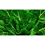Heirloom Vates Collard Green Seed