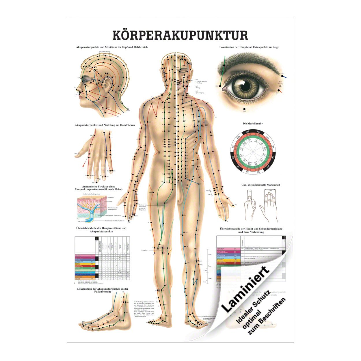 Körperakupunktur Poster Anatomie 70x50 cm medizinische Lehrmittel ...