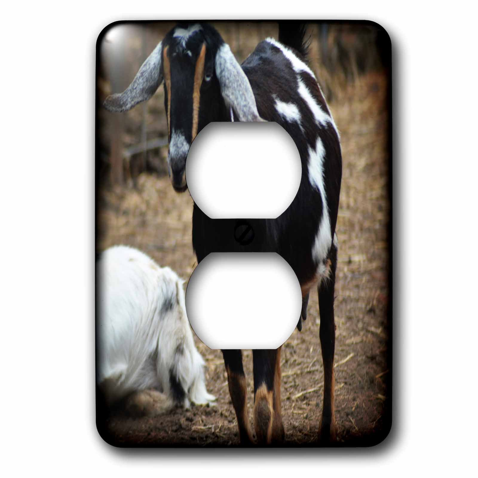 3dRose WhiteOaks Photography and Artwork - Goats - Black Goat with Brown is a photo of a beautiful colored goat - Light Switch Covers - 2 plug outlet cover (lsp_265340_6)