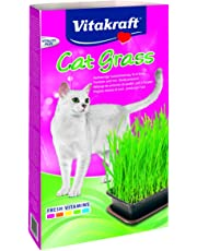 Vitakraft - 24031 - Herbe à Chat - Cat-Gras
