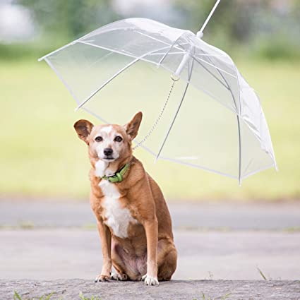traslúcido paraguas para perros Cachorros & mascotas Chubasquero petumbrella 70 cm