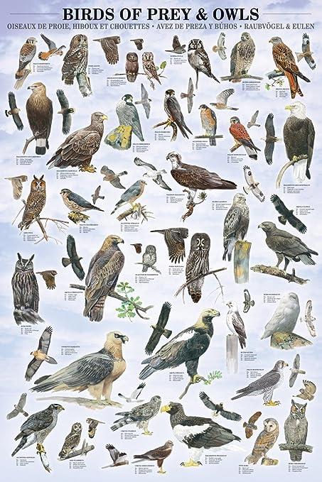 Poster Aves de Caza: Amazon.es: Hogar