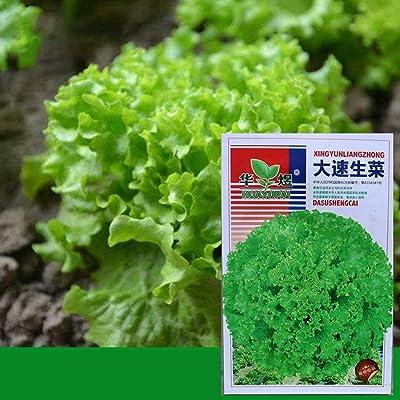 MinGe Seeds-100pcs Lettuce Seeds, American Fast Growth Lettuce Plant Garden Planting Seeds Vegetables : Garden & Outdoor