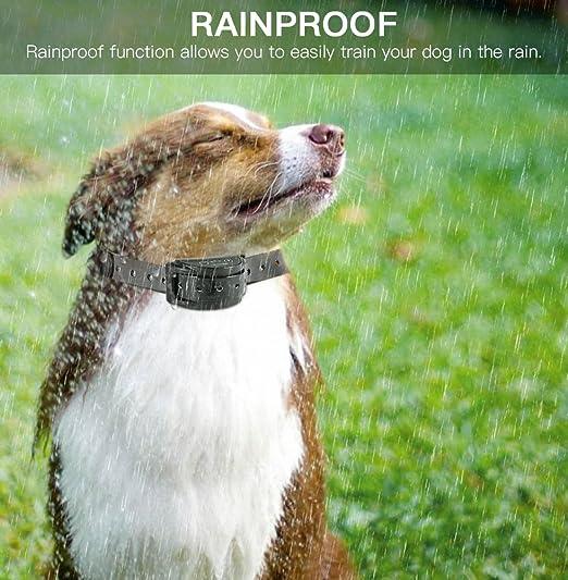 Collar Antiladridos para Perros con Sonido y Vibración 100% Inofensivo a Perro con 5 Niveles Ajustables de Control de Sensibilidad de 5-8.5inch a Perros: ...