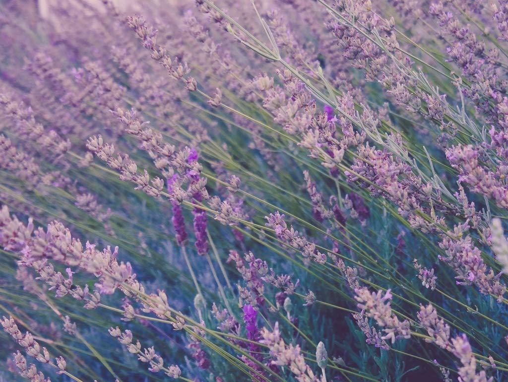 Lais Puzzle Lavendel 2000 Teile B07P79YMP3 Klassische Puzzles Leicht zu reinigende Oberfläche | Zuverlässige Qualität