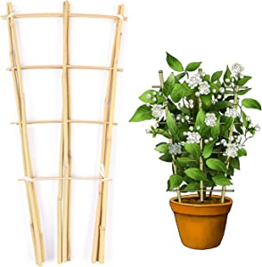 Cambaverd Natural Bamboo Fan-Shaped Trellis 1.5ft (45cm), Eco-Friendly Support for Climbing Plants, Hoya Plants Ivy Plants Monstera and a Pothos - Pack of 3 trellises