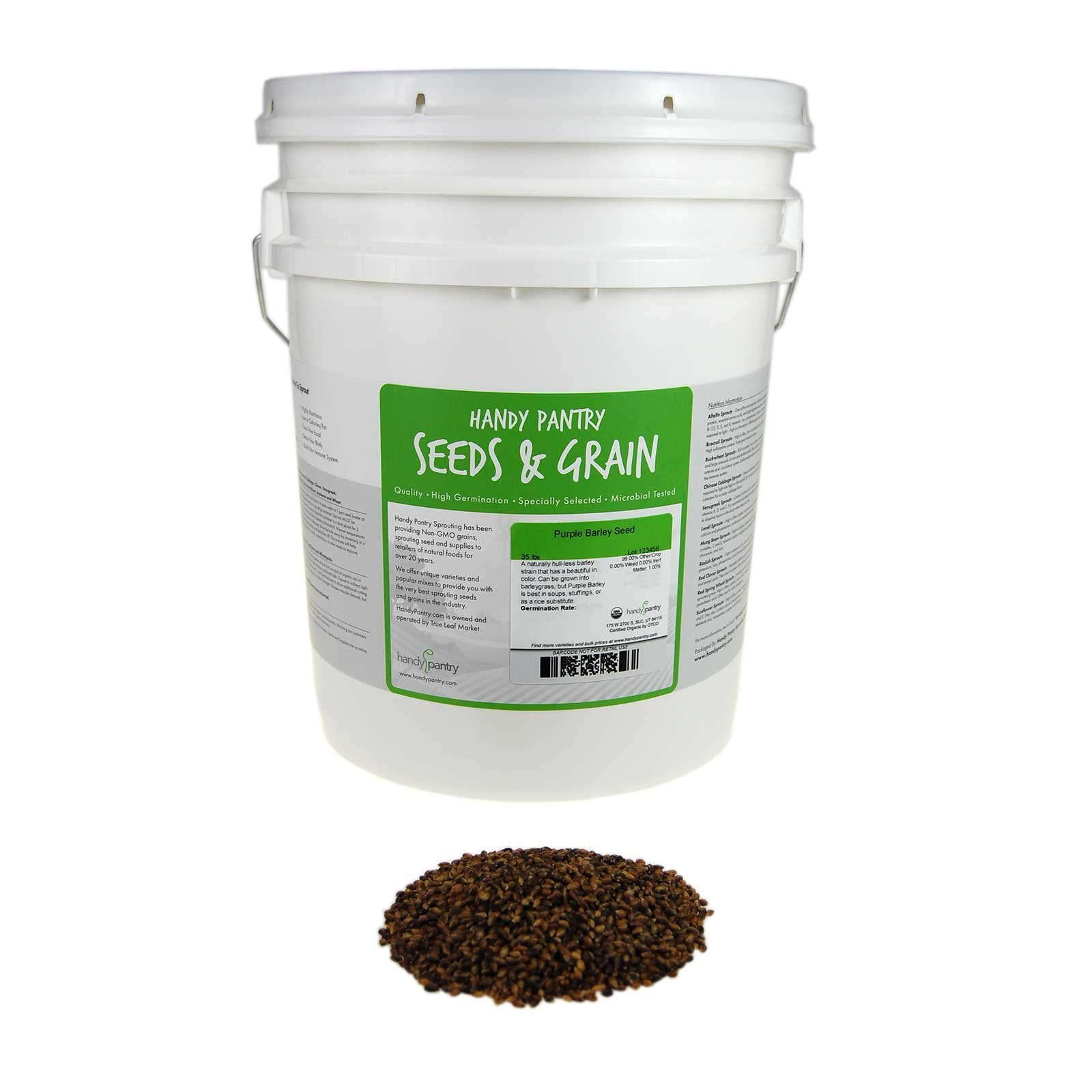 Purple Barley Seeds - Certified Organic - 35 Lb Bucket - Handy Pantry Brand - Also Called Black Barley - No Hull - For Barleygrass, Grind for Flour, Food Storage, Soups & More