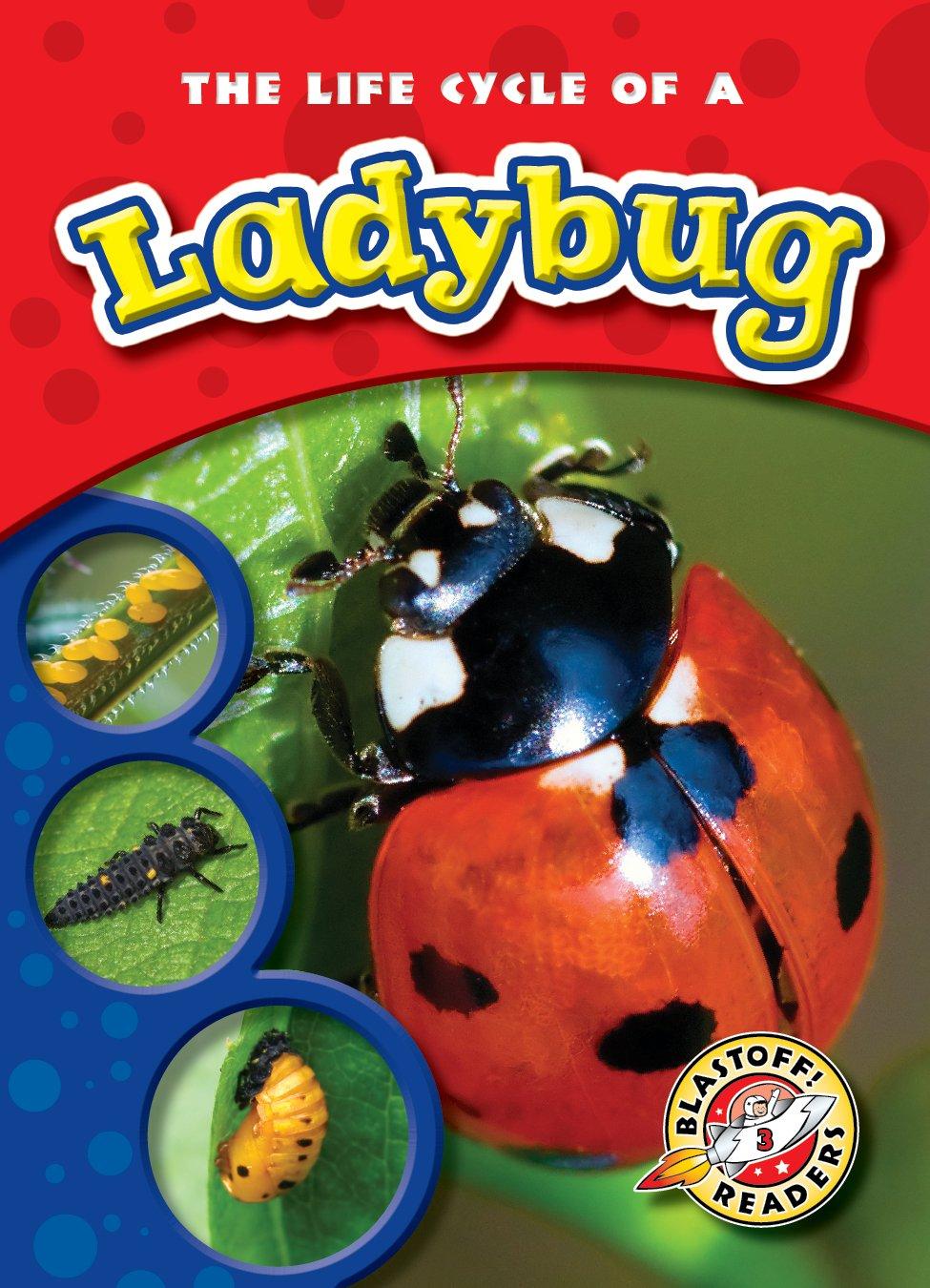 puma shoes quicker ladybug larvae stages