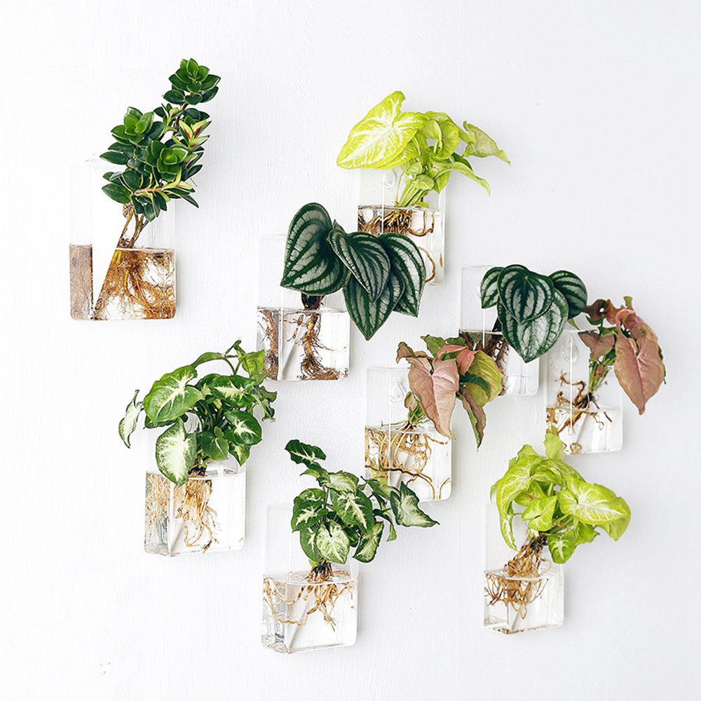 Mkono 2 Pack Wall Hanging Plant Terrarium Glass Planter for Home Decor, Rectangle
