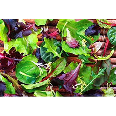 Mesclun Blend Lettuce & Greens Mix Seeds - For the tastiest salads ever!!! (25 - Seeds): Garden & Outdoor