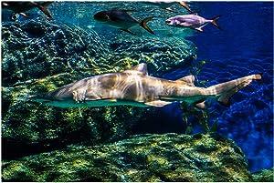 SODIKA Aquarium Background Fish Tank Decorations PVC Adhesive Shark Underwater World