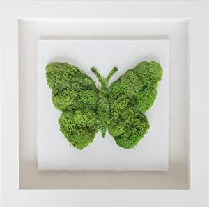 Oliver Gal 'Butterfly Contemporary Animals Framed Wall Moss Art for Home Décor & Office. Hand Crafted and Ready to Hang, 12x12