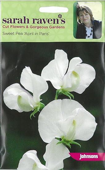 JOHNSONS SEEDS  SARAH RAVEN CUT FLOWER  SWEET PEA APRIL IN PARIS SEED