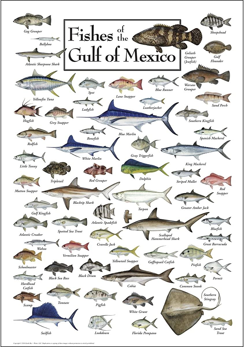 Earth Sky + Water Poster - Fishes of the Gulf of Mexico
