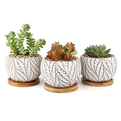 T4U Small Succulent Pots Cement Planters for Succulents, 4 Inch Succulent Small Pot Set of 3, Leaf Pattern Indoor Concrete Cactus Plant Pot with Saucer Round Succulent Holder for Home Office Table: Garden & Outdoor