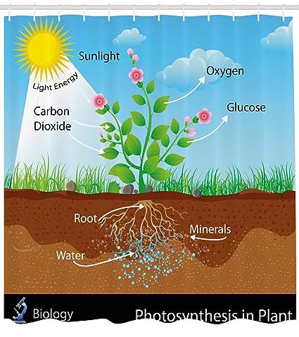Educational cortina de ducha por Ambesonne, Fotosíntesis en planta diagrama Biología Botánica agricultura medio ambiente