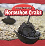 Horseshoe Crabs (Living Fossils)