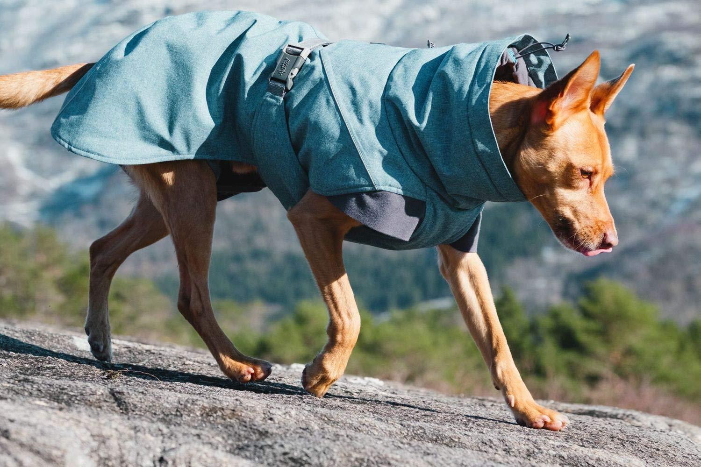 Hundemantel Hund trägt Hundemjackel in den Bergen