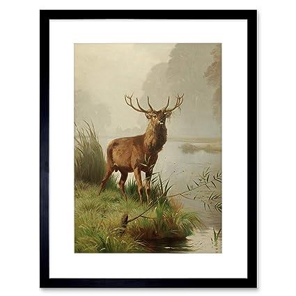 Framed Print Picture Poster Stag Deer Elk Roe Deer Moose Animal Art Reindeer