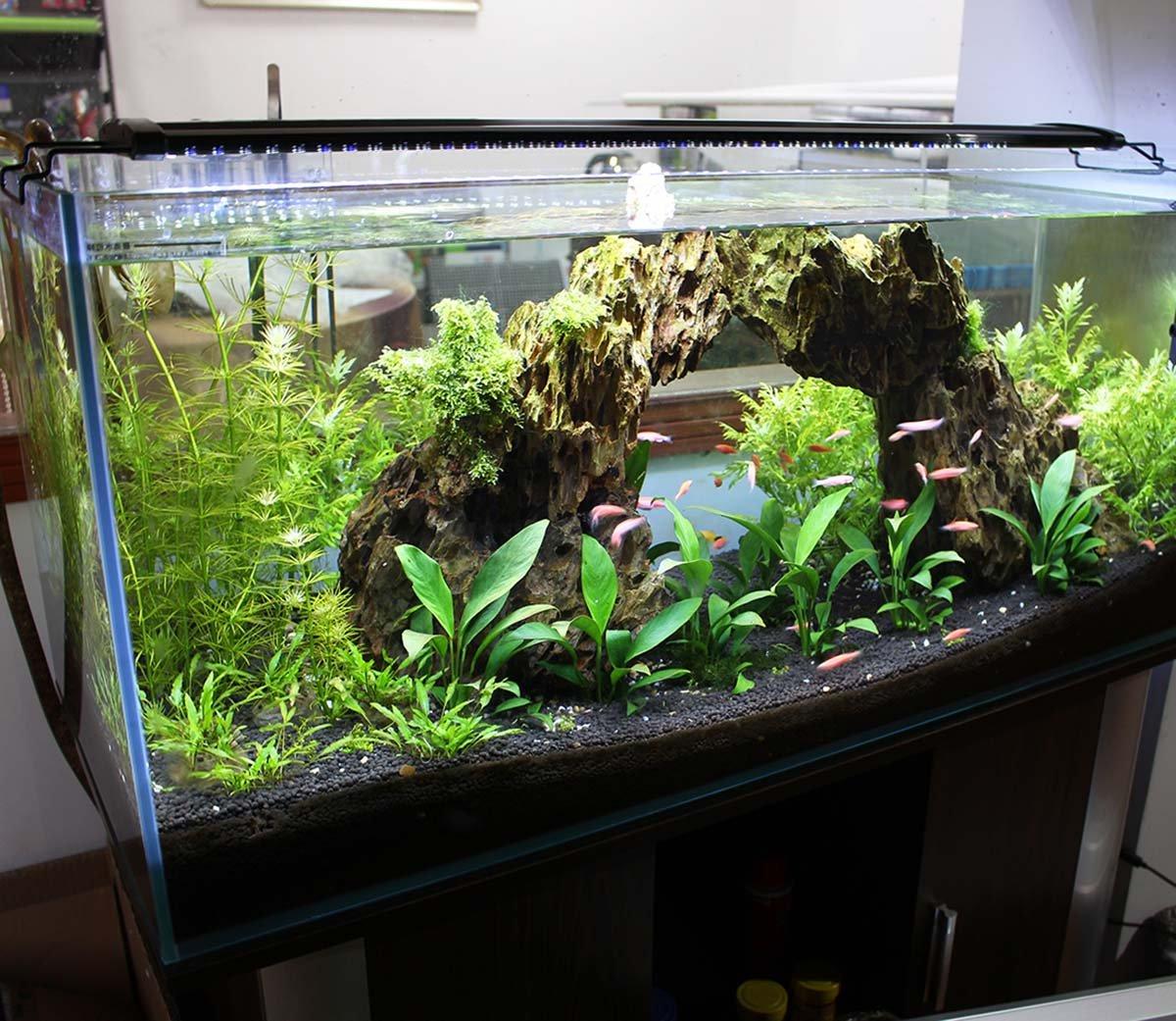 Acuario Aquarieneco con luz de 27-180 cm. Peces y plantas LED ...
