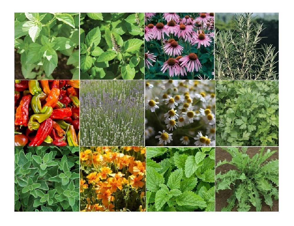 David's Garden Seeds Collection Set Herb Medicinal 19 Varieties 8876 (Multi) 6000 Seeds (Non-GMO, Open Pollinated, Organic) by David's Garden Seeds