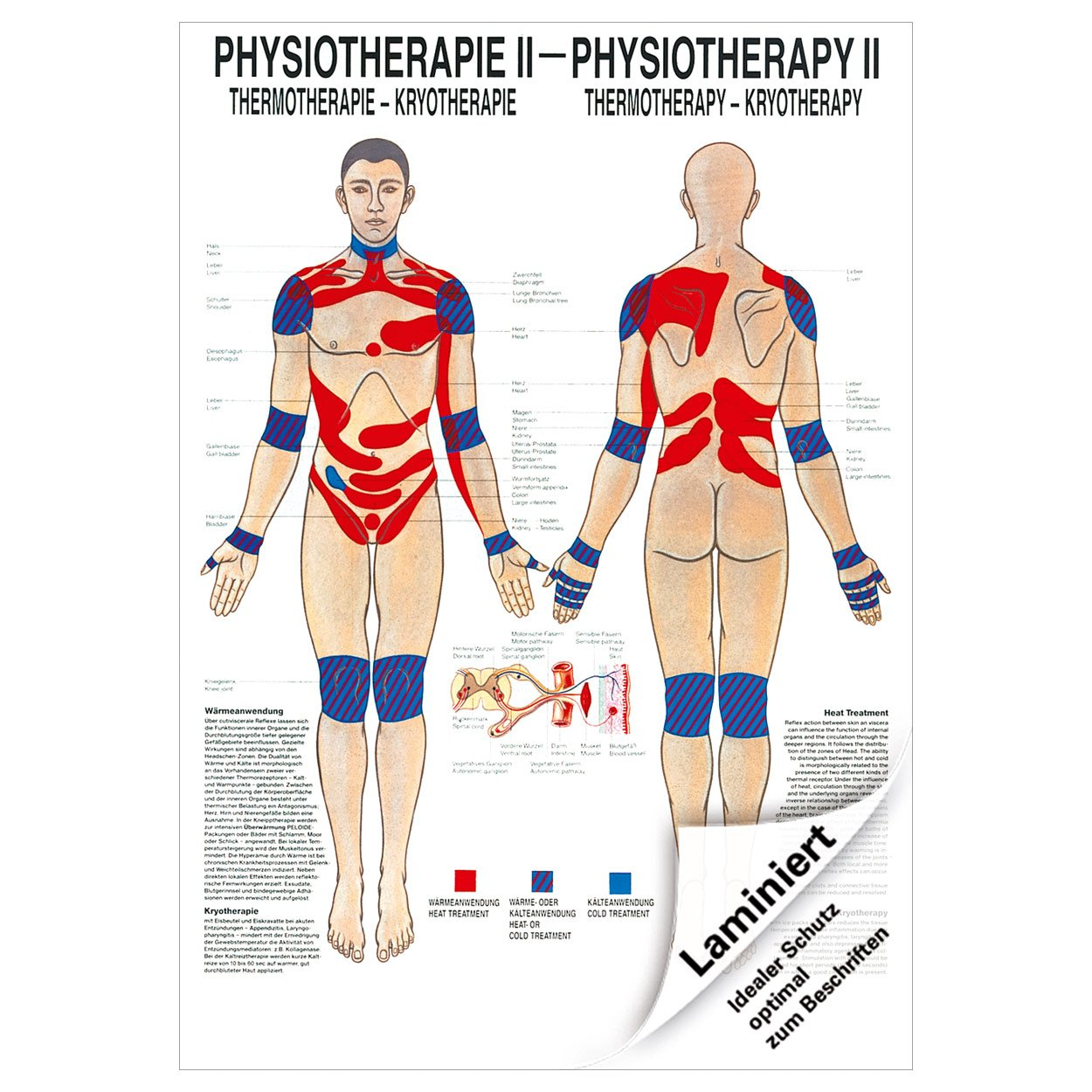Sport-Tec Thermotherapie Poster Anatomie 70x50 cm medizinische Lehrmittel