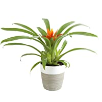 Deals on Indoor Live Plants on Sale from $15.74