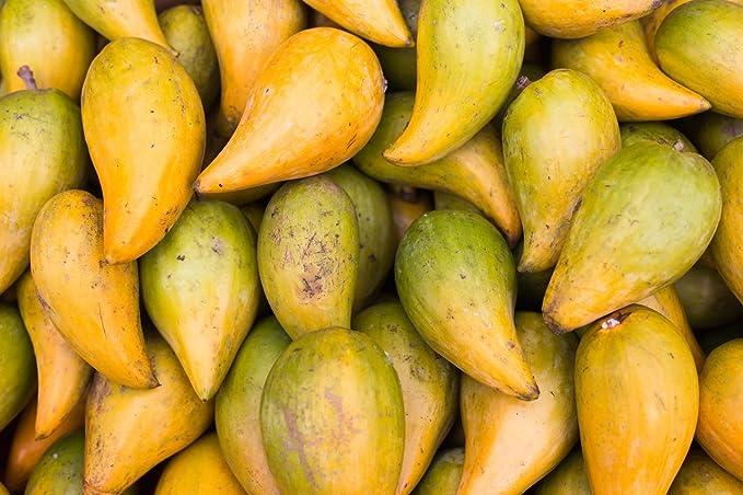 Tasty Shake Coco Choco - Super Shake Bio - Smoothie de chocolate de coco | 200 g | Purasana: Amazon.es: Salud y cuidado personal