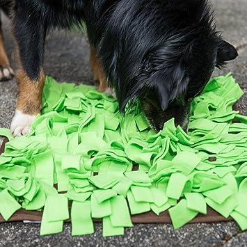 leckerli teppich für hunde