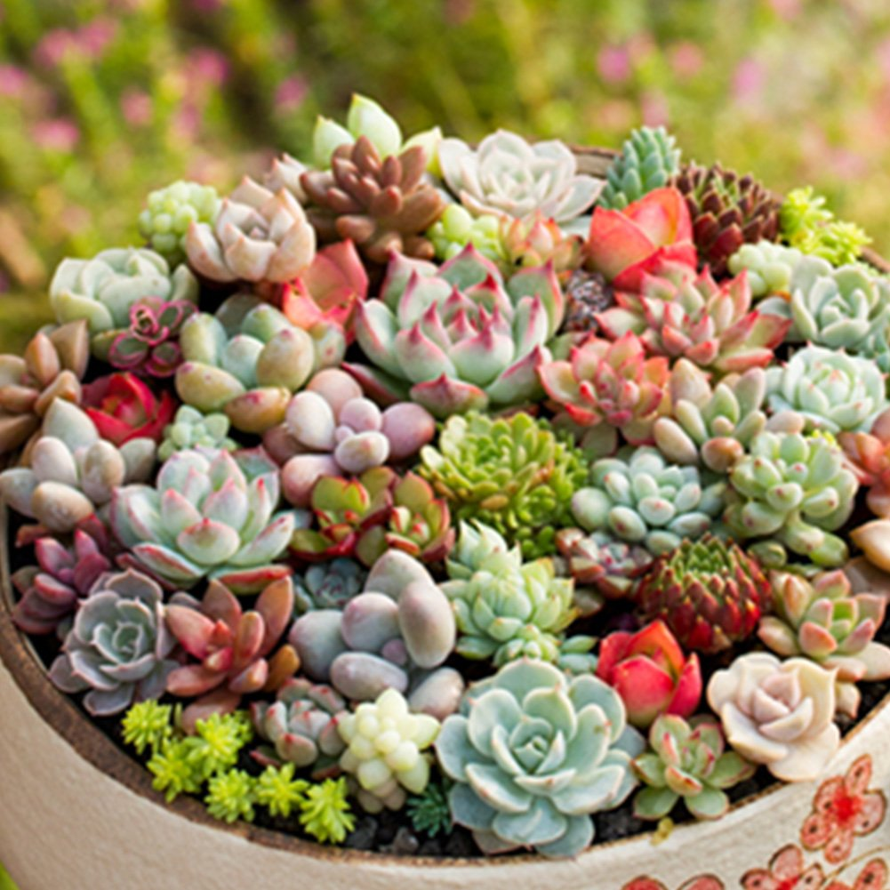 300 Pack Mix Succulent Seeds, Indoor Balcony Bonsai Plants Flower Seeds, Pots Planters for Home Garden Decoration Tookie