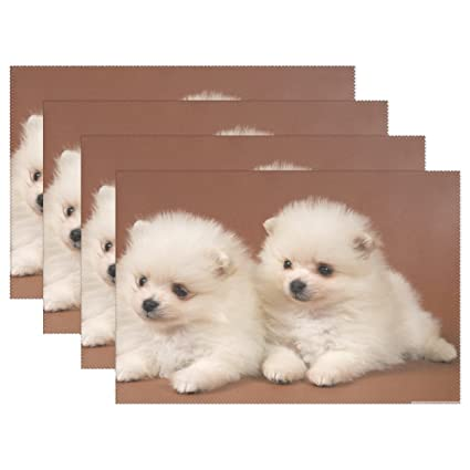 Amazon Com Qyueshang Animal Dog Pomeranian White Yellow Small