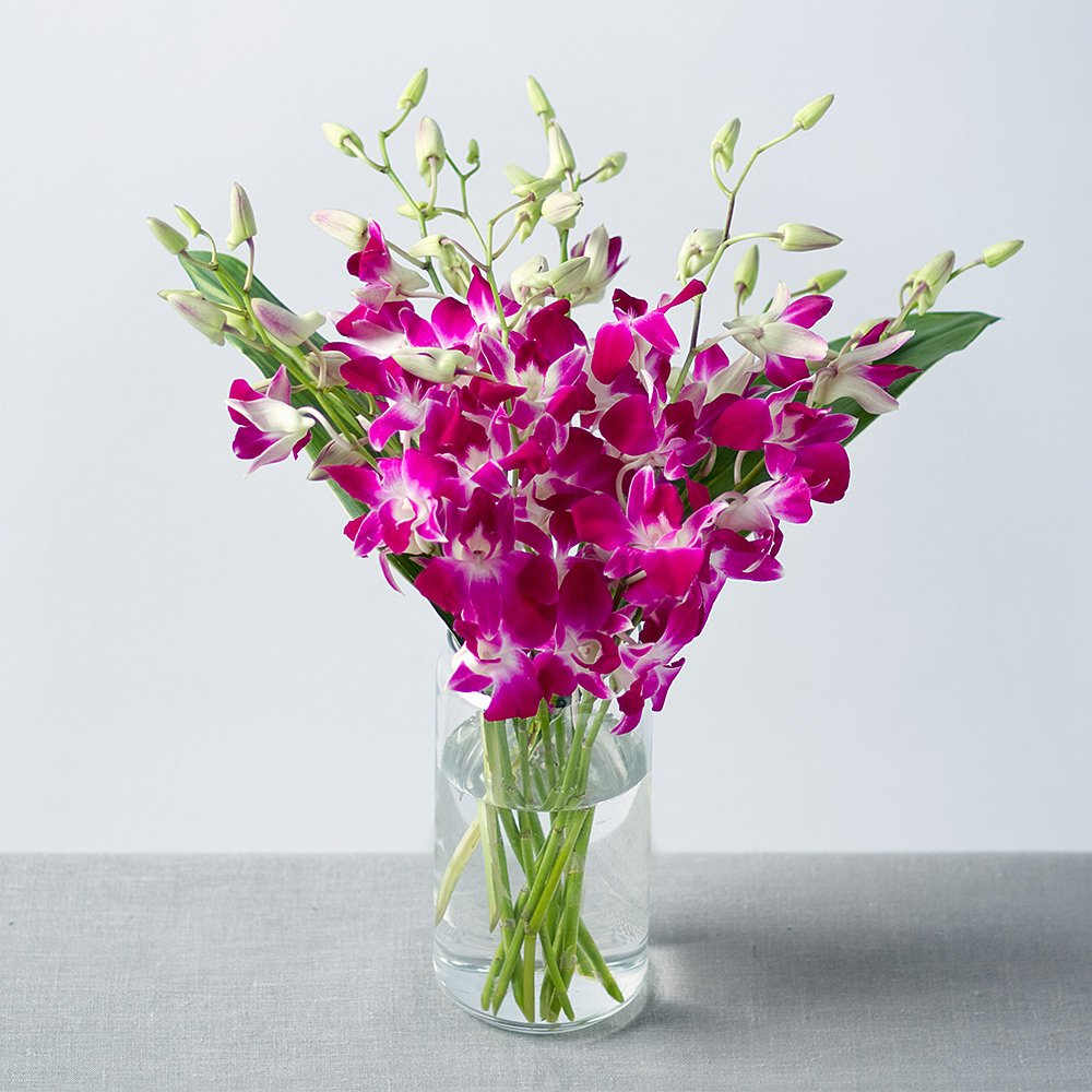 Oriental Orchids Bunches