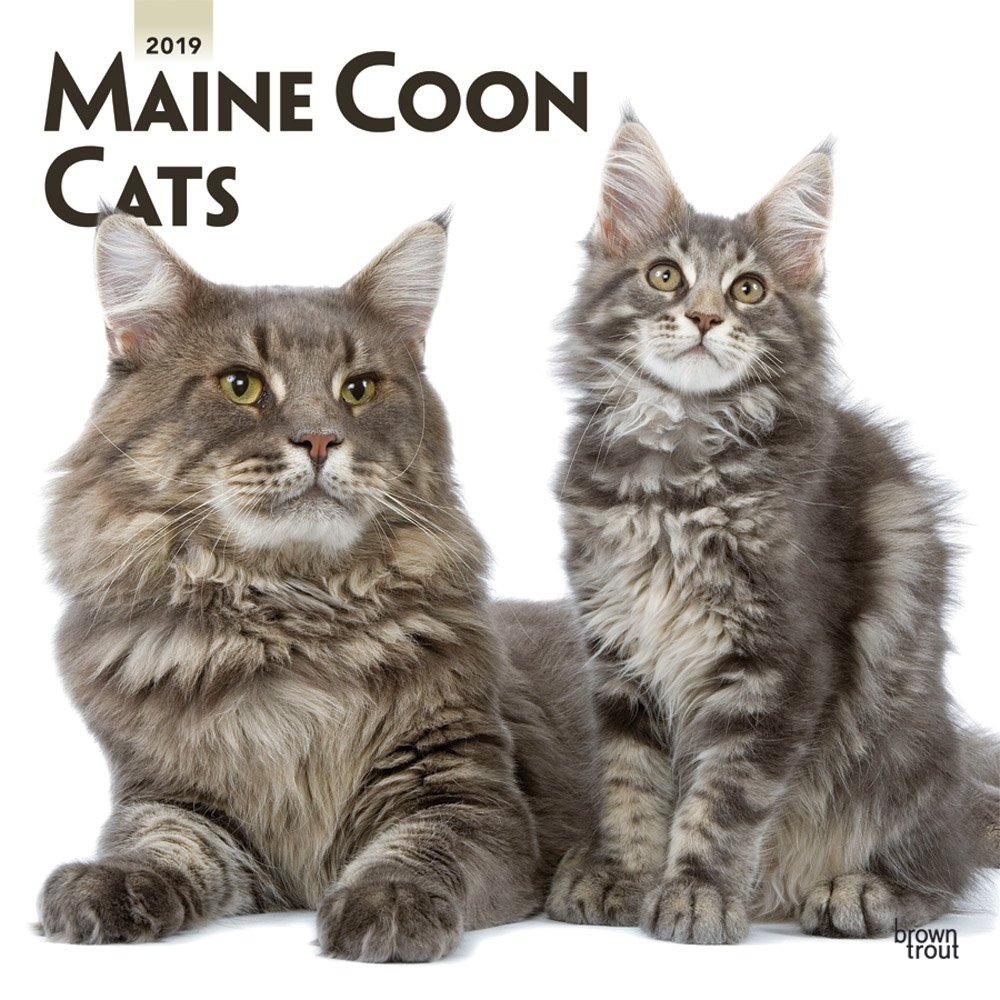 Maine Coon Cats 2019 12 x 12 Inch Monthly Square Wall Calendar, Animals Cats Maine Coon (Multilingual Edition)