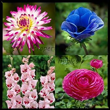 100 bumper pack flower bulbs summer border collection perennial 100 bumper pack flower bulbs summer border collection perennial flowers mightylinksfo