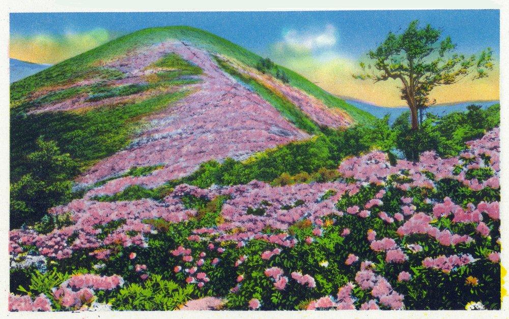 買い保障できる North Bag Carolina 8oz – ビューのパープルRhododendron Near in Bloom Near Blue Ridge Parkway 24 x 36 Giclee Print LANT-35790-24x36 B074RWZFDH 8oz Coffee Bag 8oz Coffee Bag, 合川町:373c2742 --- arianechie.dominiotemporario.com