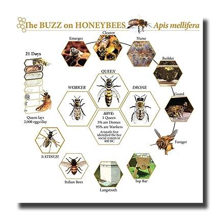 Amazon Lifespan Of A Honey Bee Canvas Wall Art Beautiful