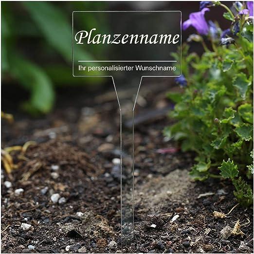 koder acrílico cristal – Etiquetas para plantas (rectangular transparente – Jardín Conector, hierbas letreros, Planta, conector – Selección, Stevia: Amazon.es: Jardín
