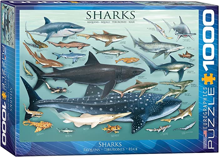 Top 9 Shark Jigsaw Puzzles