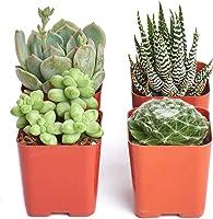 """Purrr-FECT Plant Pack Non Toxic Pet Friendly 2"""" Succulent Collection by Shop Succulents"""