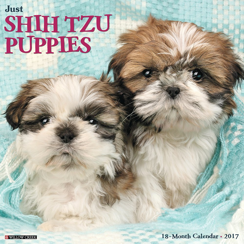 Amazoncom Just Shih Tzu Puppies 2017 Wall Calendar Dog Breed