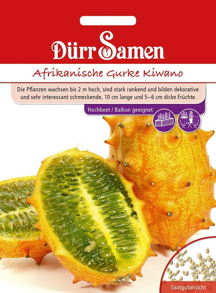 Horngurke Afrikanische Gurke Kiwano Horngurkensamen von D/ürr-Samen