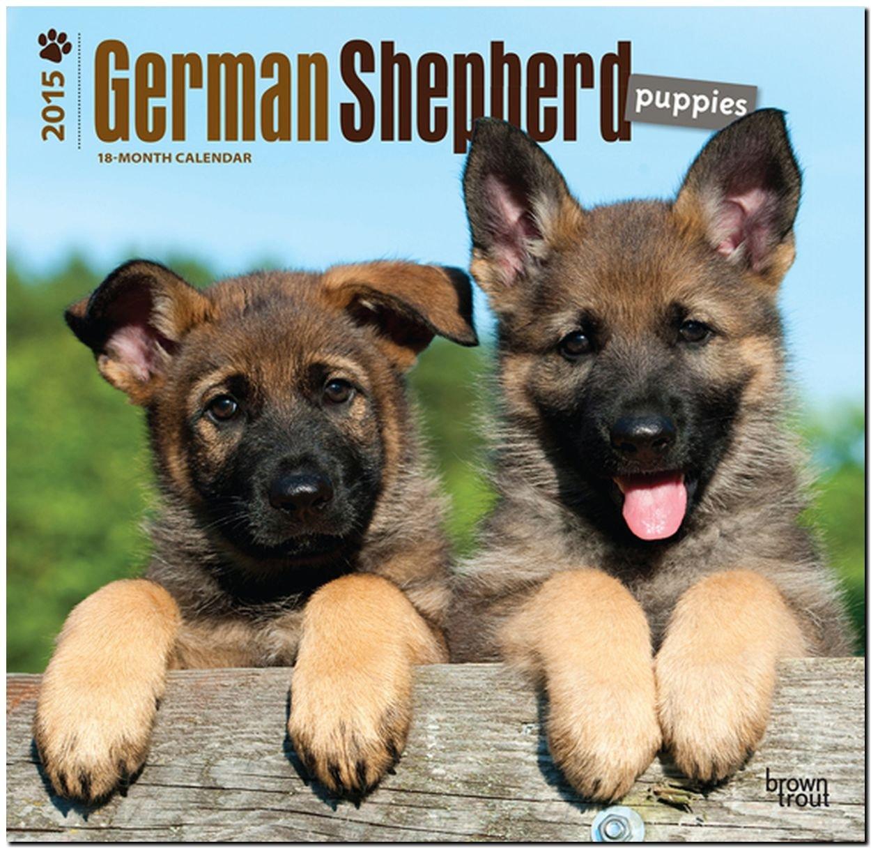 German Shepherd Puppies 2015 - Deutsche Schäferhunde - Welpen