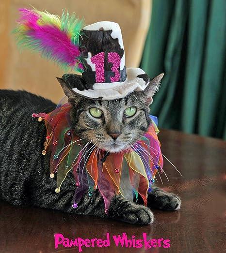 Dog Birthday Hat For Cat