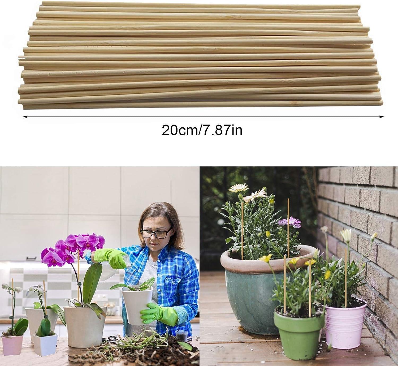 RTWAY Lot de 100 piquets en bambou pour plantes Pour soutenir les tiges de vigne Avec 50 clips pour orchid/ées Support pour plantes
