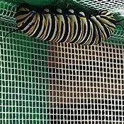 Amazon.com: Backyard Safari Butterfly Habitat: Toys & Games