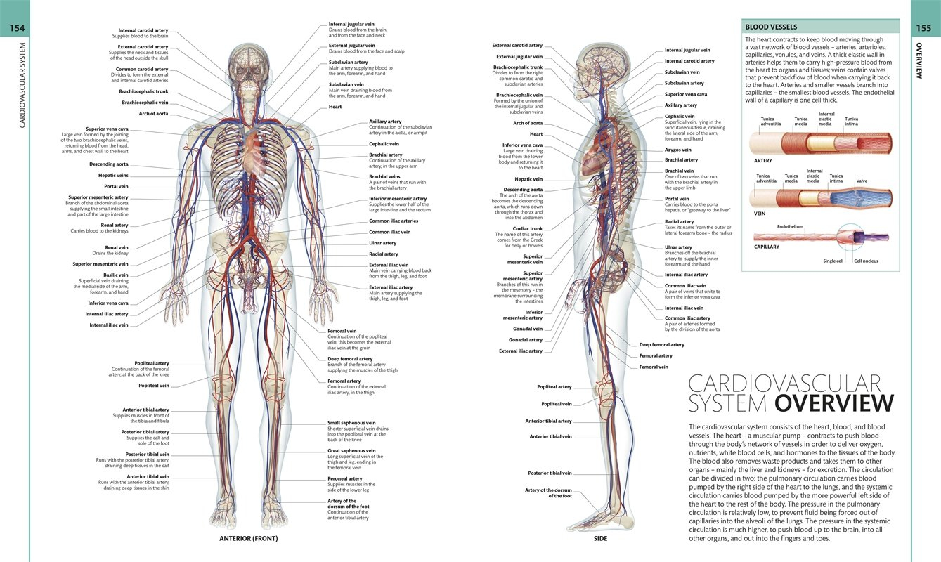 Human Anatomy The Definitive Visual Guide Dk 0790778019549